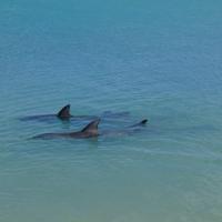 Vier Delfine am Strand