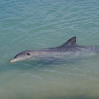 Delfin am Strand