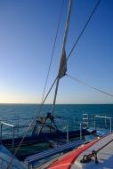 Shark Bay Cruise