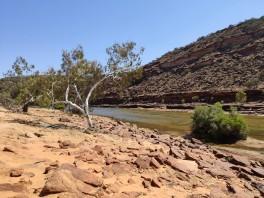 Schlucht des Murchison River (Kalbarri NP)