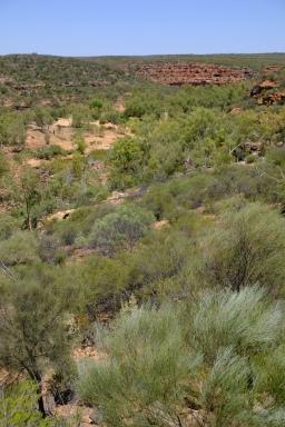 Aussicht vom Ross Graham Lookout (Kalbarri NP)