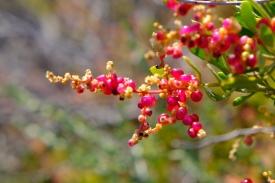 Früchte am Bigurda Trail