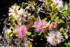 Blüten am Bigurda Trail