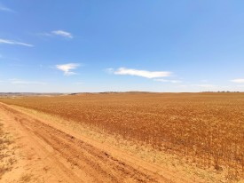 Getreidefelder (Northampton)