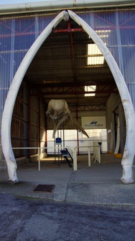 Eingang zur Whale World Ausstellung