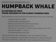 Humpback Whale Informationstafel