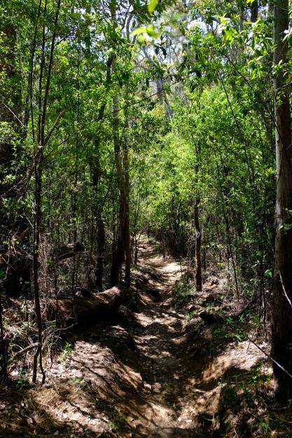 Durch den Wald zum Castle Rock