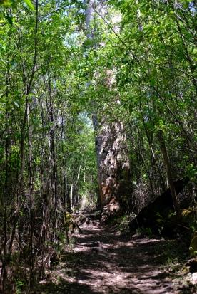 KArri Baum am Weg zum Castle Rock