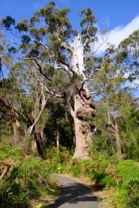 Tingle Baum