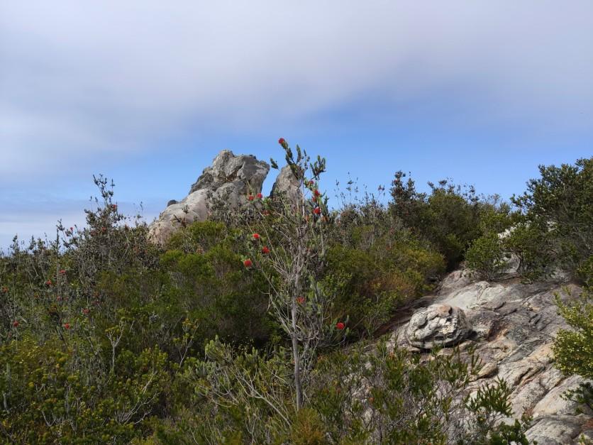 Zum Gipfel des East Mount Barren