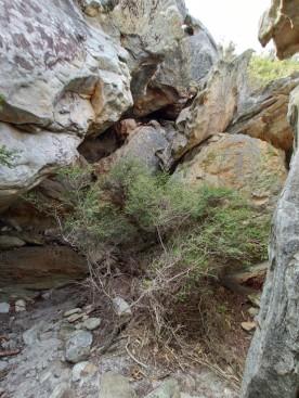 Auf den East Mount Barren