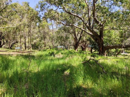 Wald mit Marri und Yate Bäumen beim Castle Rock Parkplatz