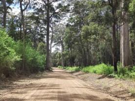 Gravel Road durch den Wald zum Mount Frankland