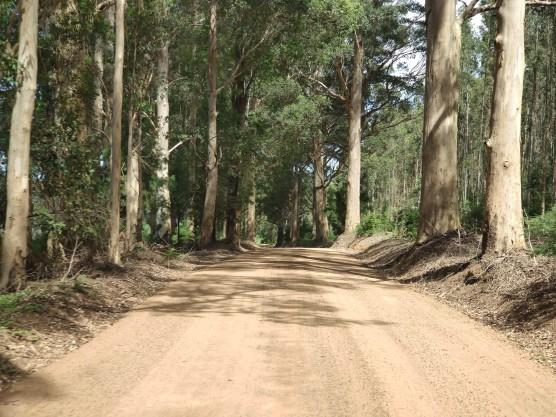 Tingle Drive