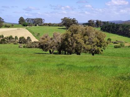 Grüne Wiesen