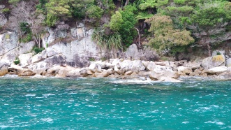 Seehunde auf Adele Island