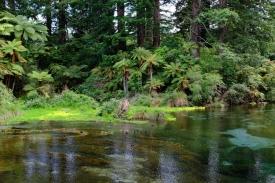 Quellen von Hangarua (Te Puna-a-Hangarua)