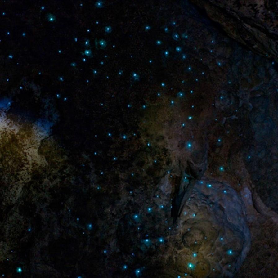 Glowworms.jpg