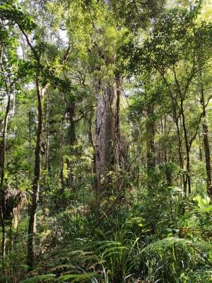 Wald bei Te Matua Ngahere