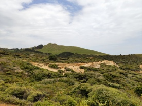 Arai te Uru Nature Reserve