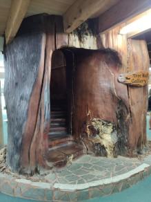 Treppe in einem Kauri Stamm