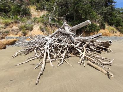 Abgestürzter Baumstrunk an Orere Beach