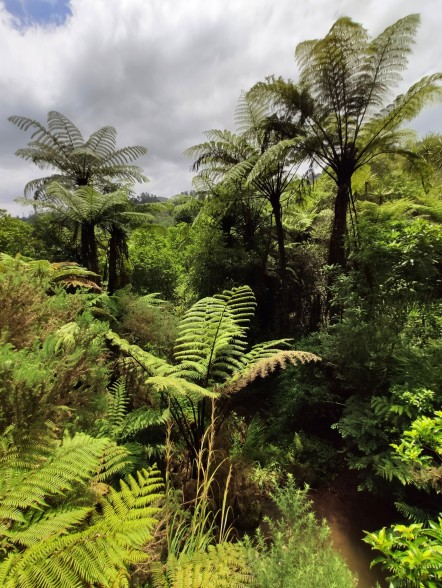Karangahake Valley