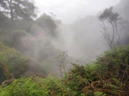 Waikite Valley