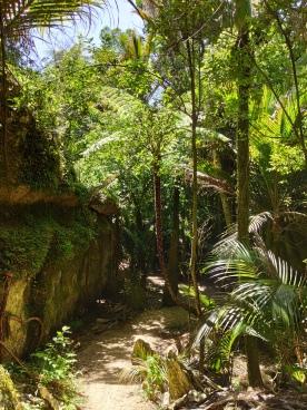 The Grove Scenic Reserve Walk