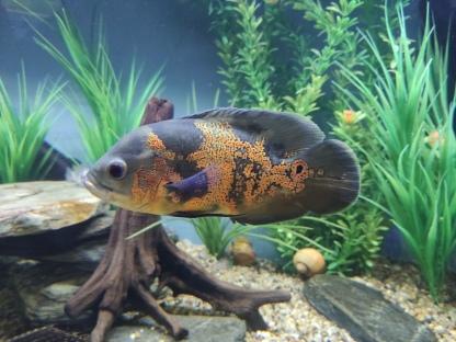 Fisch im Kiwi Centre