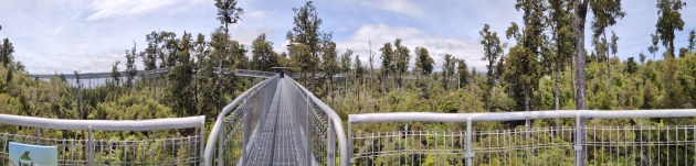 West Coast Tree Top Walk