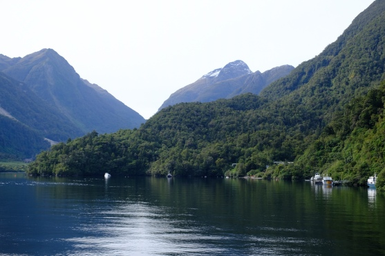 Deep Cove (Doubtful Sound)