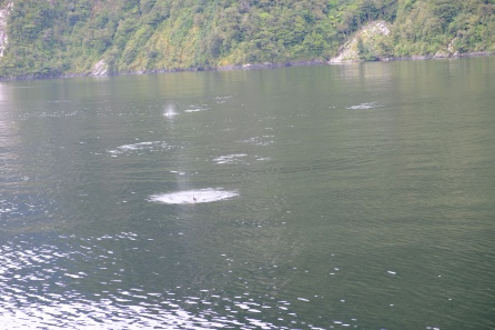 Delfine (Doubtful Sound)