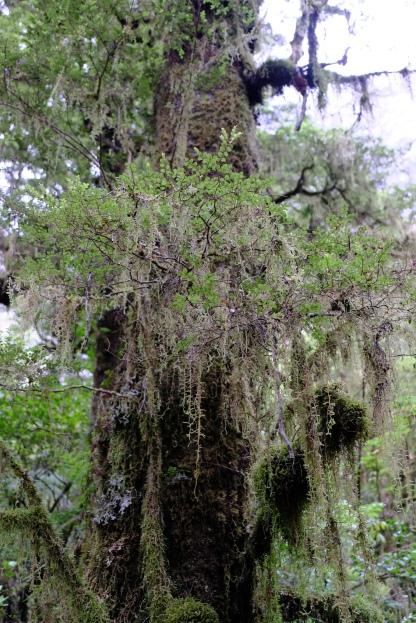 Baum bei The Chasm