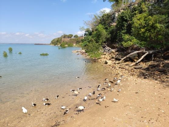 Strand (bei Aquascene) in Darwin